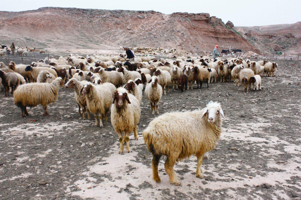KundenMagnet Blog - Macht sich der Wolf Sorgen darüber, was Schafe über ihn denken?